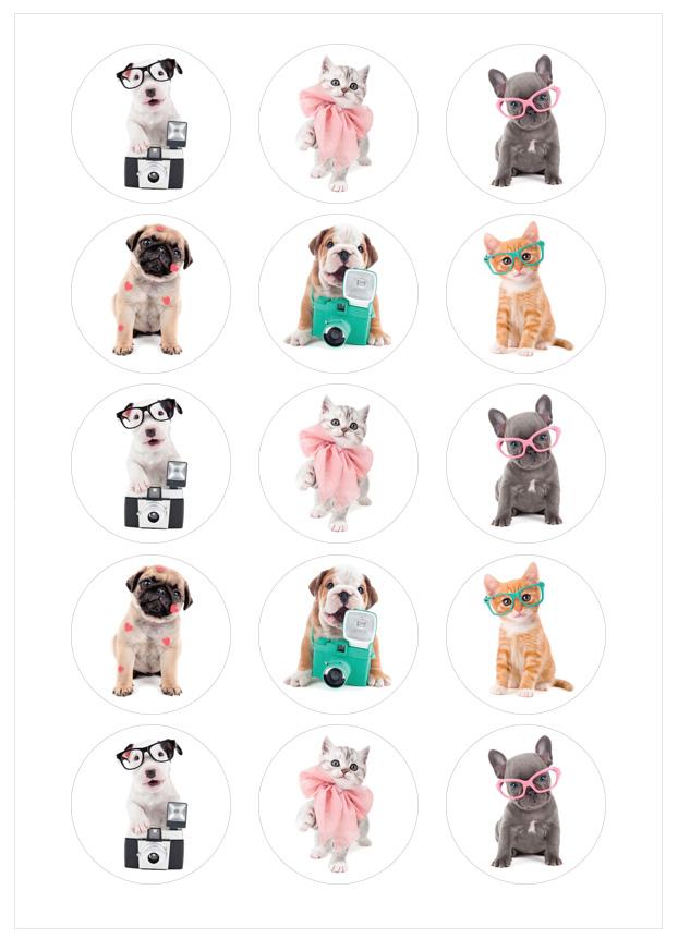 Imagen del producto: Modelo nº 1542: Studio Pets
